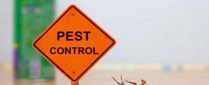 Best pest control services in Edmonton